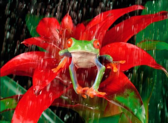 Xúc cảm một ngày mưa