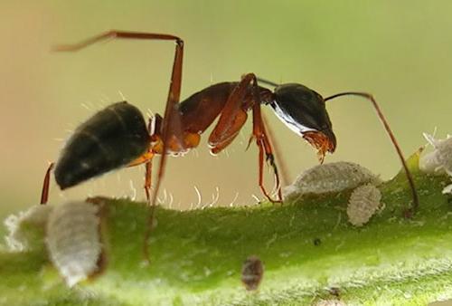 Chuyện ngụ ngôn về con kiến và bài học quản lý
