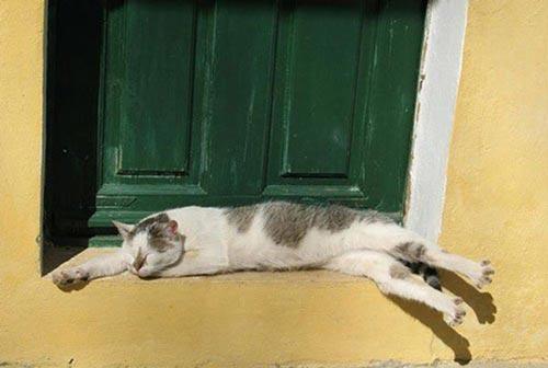 Động vật ngủ